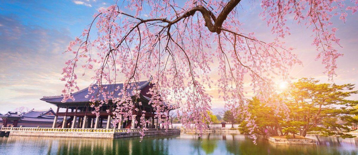 Paket Tour ke Korea Selatan 6 Hari 5 Malam April Musim Semi (Spring)