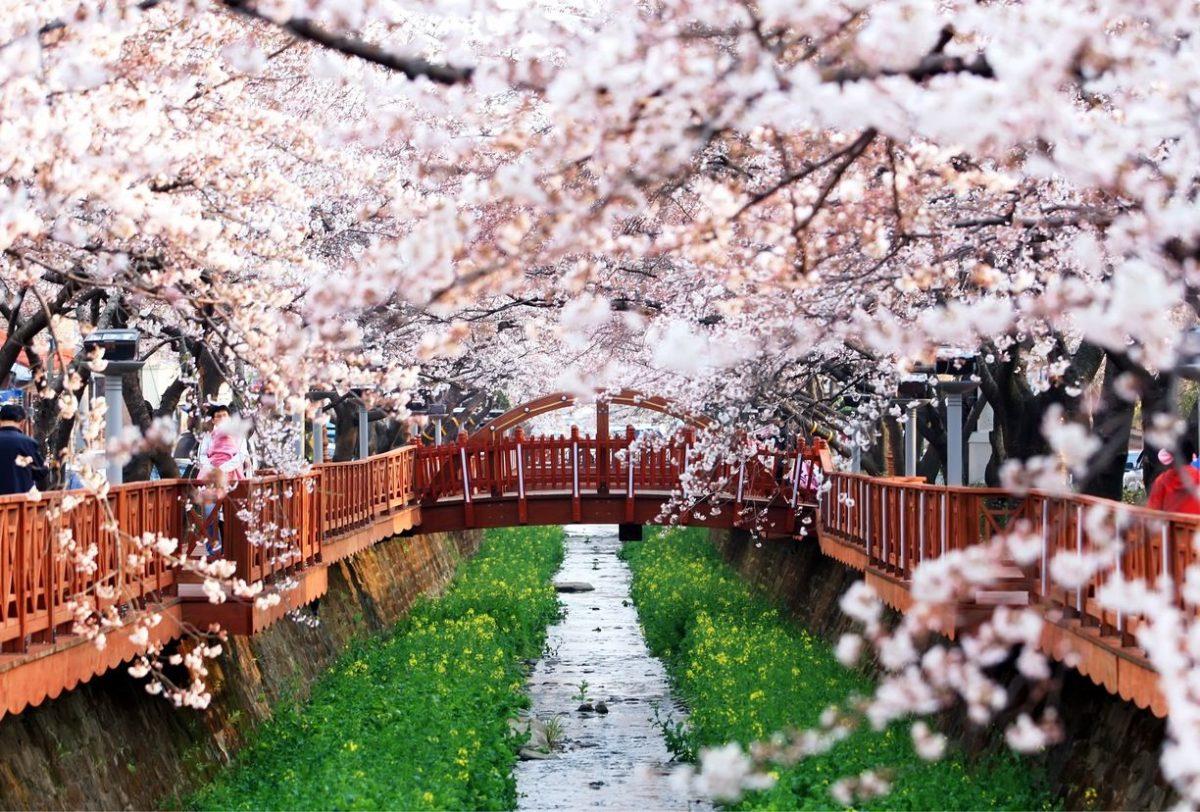 Paket Tour ke Korea Selatan 6 Hari 5 Malam Maret Musim Semi (Spring) 2019
