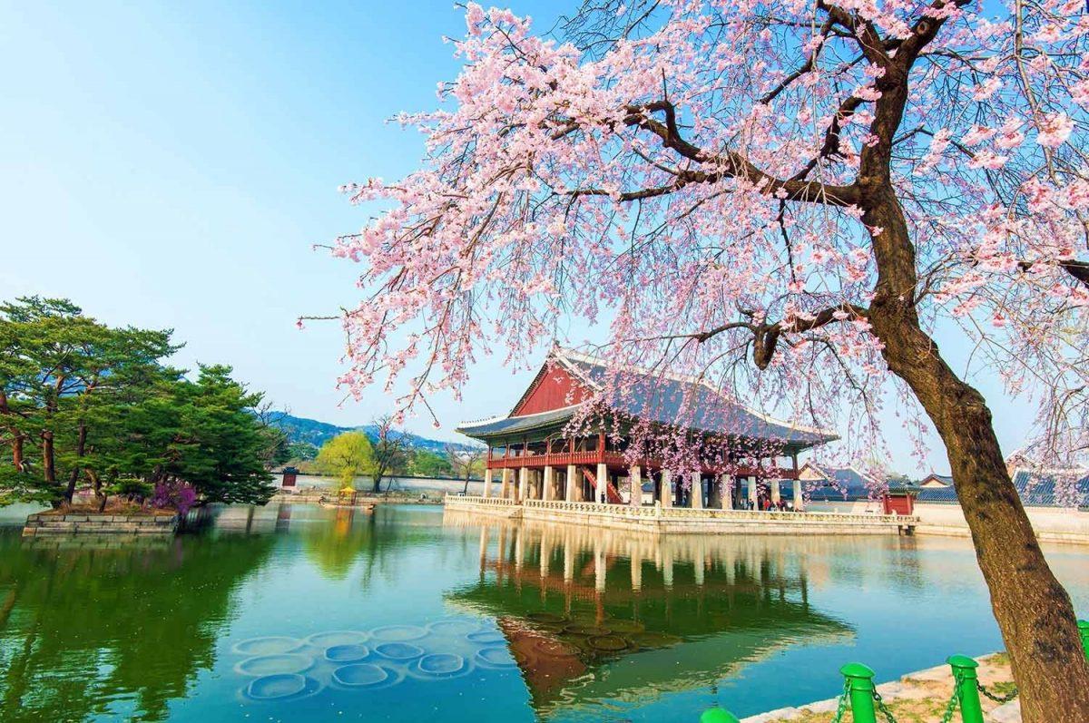 Paket Tour ke Korea Selatan 6 Hari 5 Malam Mei Musim Semi (Spring)