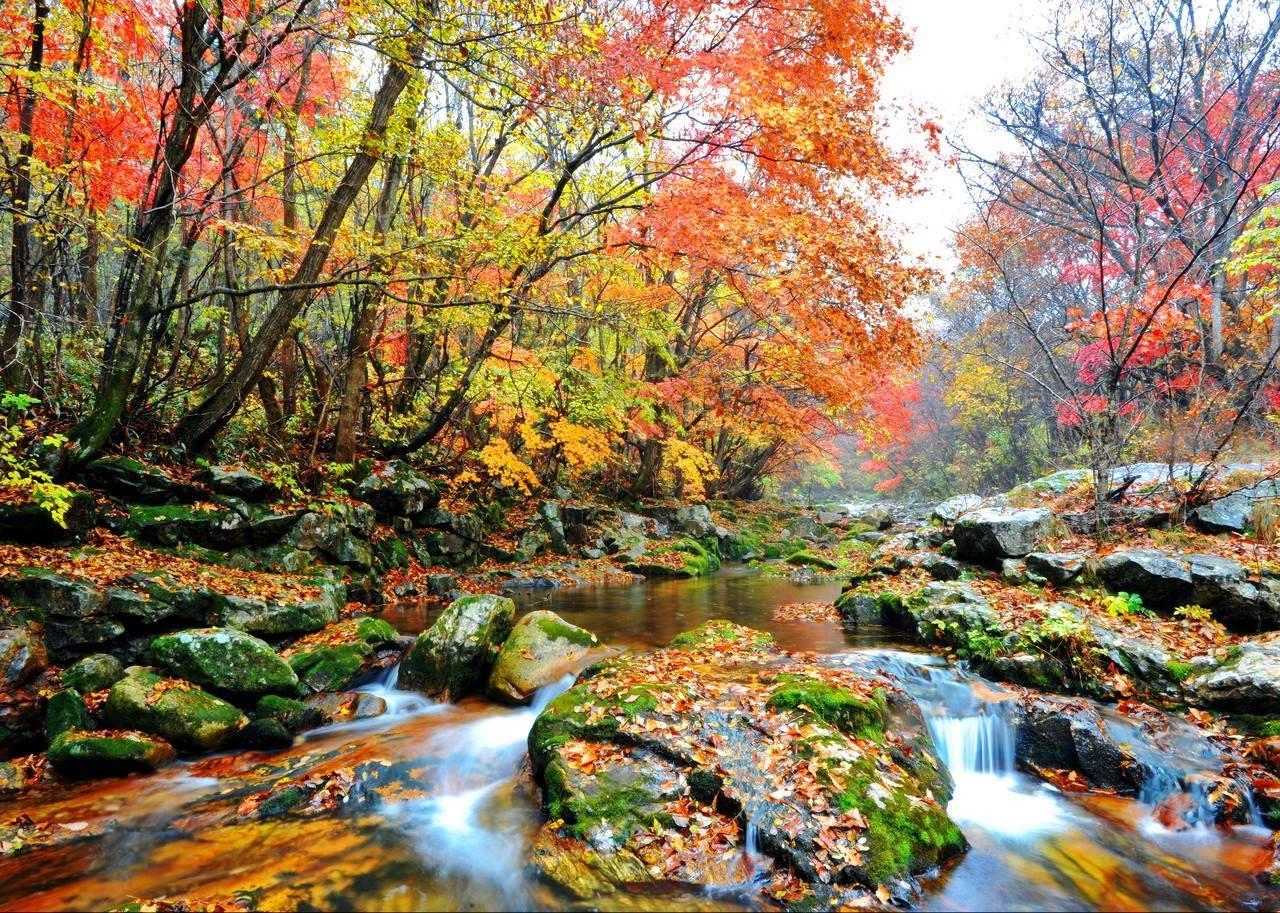 Paket Tour ke Korea Selatan 6 Hari 5 Malam November Musim Gugur