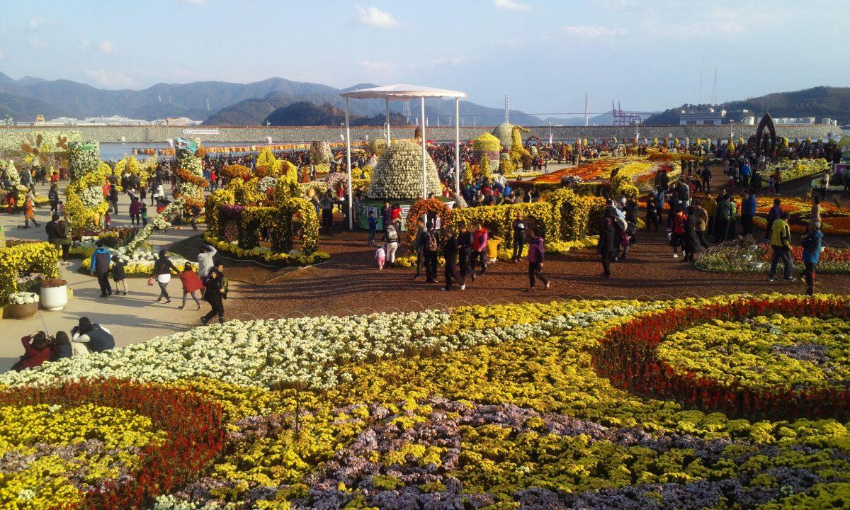 Festival Bunga Krisan, Pesoan Musim Gugur Yang Mengagumkan di Korea Selatan