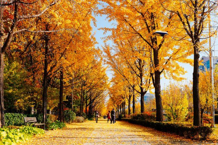 Paket Tour ke Korea Selatan 5 Hari September / Musim Gugur ...