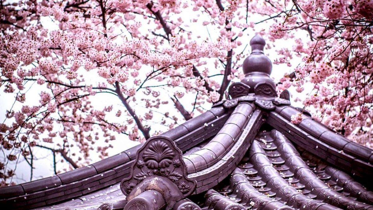 Menikmati Tur Musim Semi di Korea Selatan