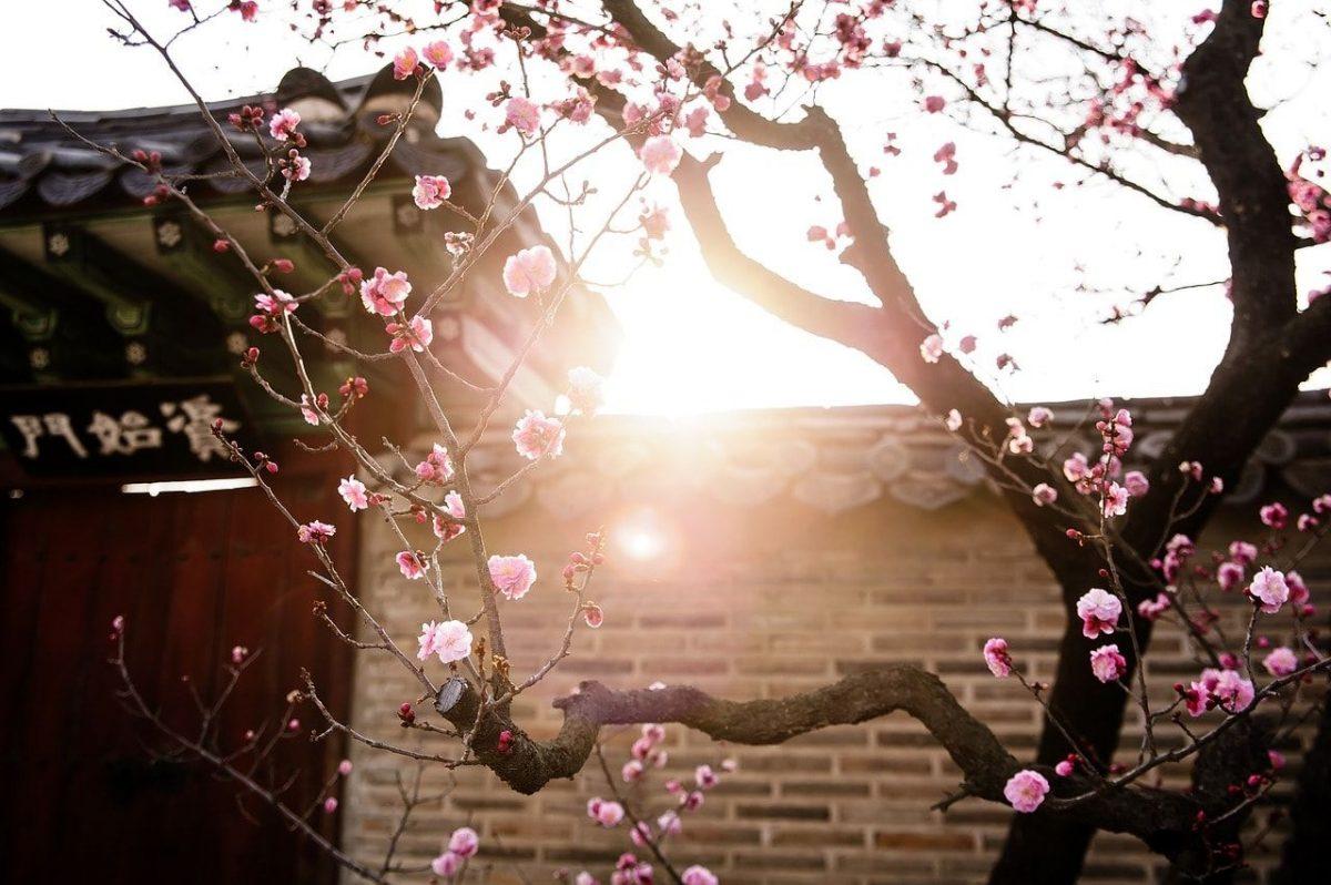 Tips Persiapan & Keperluan Liburan ke Korea Selatan Musim Semi